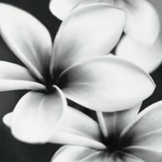 Mei стеклянное панно PRET A PORTE стена черно-белая 75х75 см Арт. PRP-WPU092 (из 3 плиток)